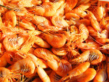 The shrimp Stock Photo