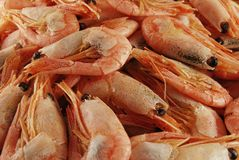 Shrimp. A group of shrimp on the table stock photography