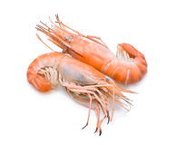 shrimp Fotos de Stock Royalty Free