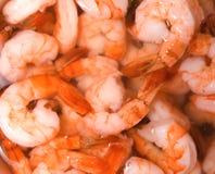 Free Shrimp Stock Photo - 7562690