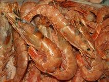 shrimp Imagens de Stock Royalty Free