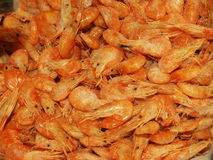 shrimp Foto de Stock Royalty Free