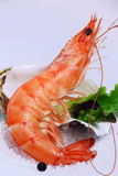 Shrimp appetiser close up Stock Photography