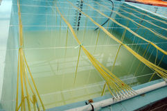 Shrimp aquaculture bath. At small industry Royalty Free Stock Images