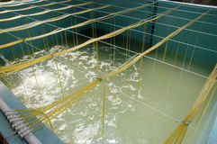 Shrimp aquaculture bath Stock Images