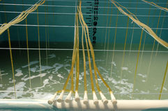 Shrimp aquaculture bath. At small industry Royalty Free Stock Photo