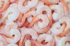 Shrimp background Stock Images