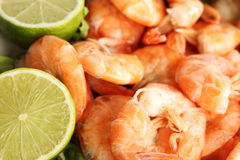 Shrimp background Stock Image