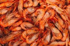 Shrimp background Stock Images