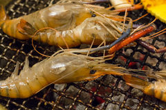 Shrimp Barbecue Grill Royalty Free Stock Photography