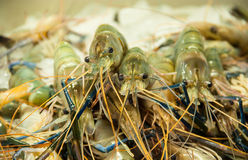 Shrimp in basket. Stock Images