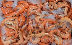 Shrimp on a bed of crushed ice Stock Photography