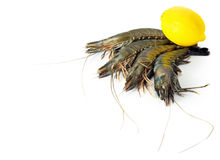Shrimp big. Raw isolated in white background Royalty Free Stock Photo