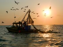 Shrimp boat and seagulls Royalty Free Stock Image