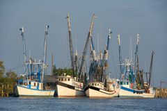 Shrimp Boats at Anchor Stock Photo