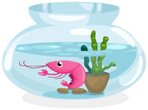 Shrimp bowl Stock Images