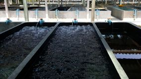 Shrimp breeding farm. This is the shrimp breeding farm Stock Images