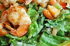Shrimp caesar salad Stock Images
