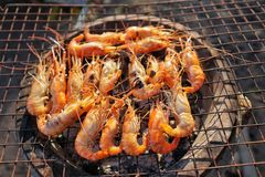 Shrimps on charcoal stove Royalty Free Stock Photo