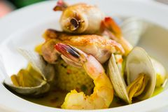 Shrimp and clam seafood appetizer on a white plate. Royalty Free Stock Photos