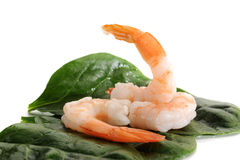 Shrimp Royalty Free Stock Photography