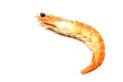 Shrimp closeup Stock Photo