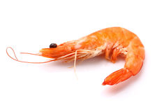 Shrimp in closeup. On a white background Royalty Free Stock Image
