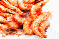 Shrimp cocktail background over white Ice on a market stall clos Stock Image