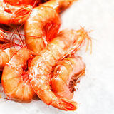 Shrimp cocktail background over white Ice on a market stall clos Royalty Free Stock Photos