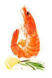 Shrimp cocktail with tartar sauce royalty free stock images
