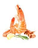 Shrimp cocktail with tartar sauce, lemon and rosemary Stock Photos
