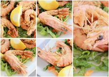Shrimp collage Stock Photography