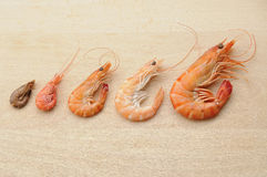 Shrimp composition Royalty Free Stock Photography