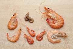 Shrimp composition Stock Images