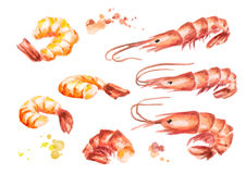 Shrimp compositions set. Watercolor. Bowl with shrimp. Watercolor. Hand-drawn illustration Royalty Free Stock Photography