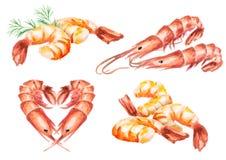 Shrimp compositions set. Watercolor. Bowl with shrimp. Watercolor. Hand-drawn illustration Stock Photos