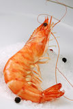 Shrimp cooked close up Royalty Free Stock Images