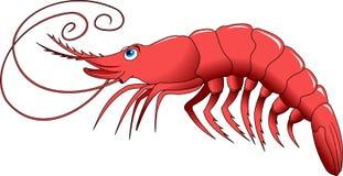 Shrimp. Cooked shrimp isolated on white photo-realistic  illustration Royalty Free Stock Image