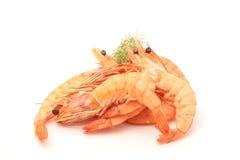 Shrimp. A cooked shrimp on white background royalty free stock image