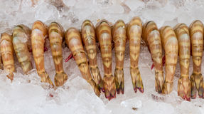 The shrimp for cooking. Royalty Free Stock Photo