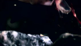 Shrimp in crab claws closeup near mouth underwater on seabed of White Sea. Unique video close up. Predators of marine life on background of pure and stock footage