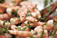 Shrimp dish Stock Photography