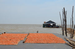 Shrimp drying in the sun in a floating village Royalty Free Stock Photography