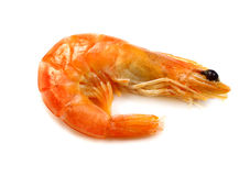 Shrimp - eastern king prawn  Stock Photo
