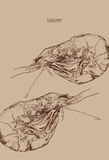 shrimp. Engraved art. Delicious marine food menu sketch. Ed objects. Use for restaurant, meal, market, store, menu, party decoration, other design Stock Images