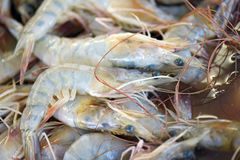 Shrimp exposed in fish market Stock Photo