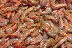 Shrimp exposed to market Stock Image