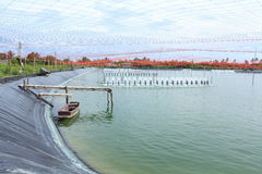 Shrimp Farm Royalty Free Stock Photography