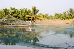 Shrimp farm on the backwaters of Kollam Royalty Free Stock Photos