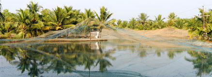 Shrimp farm on the backwaters of Kollam Royalty Free Stock Photo